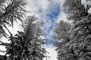 Sky. Trees. Clouds. Snow. by porTTRaits