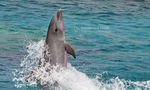 Dolphin profiles - Ukit by namu-the-orca