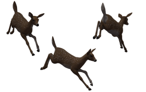 Deer - Fawn 04 by Free-Stock-By-Wayne