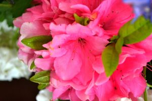 This Past Spring-Pink Flowers by MrsChibi