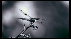 DragonFly Within The Smoke by Glory-Of-Valor