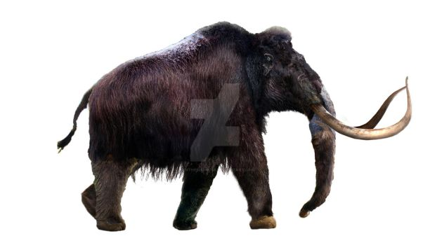 Woolly Mammoth - WIP part 3 by Dantheman9758