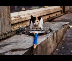 Urban Cats - 61 by MARX77