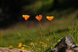 Spring 7 Triplets on the edge by kayaksailor