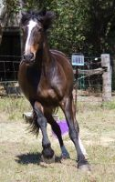 STOCK - 2014 Sep Tolly-15 by fillyrox