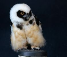 Spectacled Owl by dark-angel-11309