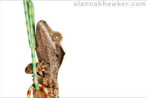 Tiny Hands by Alannah-Hawker