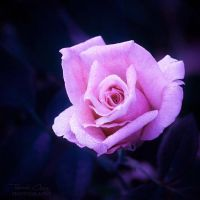 .:Pink Innocence:. by RHCheng