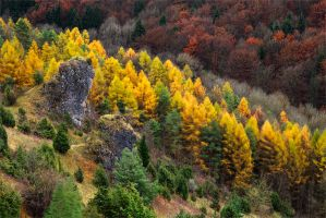 beeches and larches by mescamesh