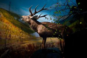 King of the forest by Aharvik