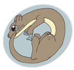 Otter by Cappies