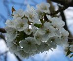 Spring 3 by Phuindrad