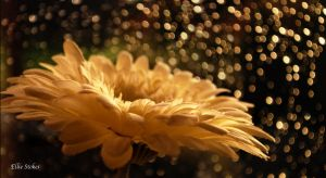 Golden Glow by Ellie-S