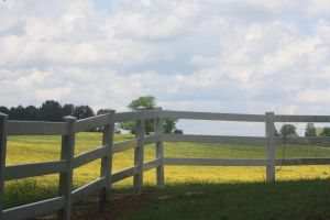 Fence in Front Of the Pasture Wallpaper by VictorVoltfan1