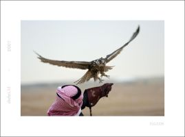 Falcon by shehri