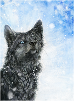 .:Black Wolf in Snow:. by WhiteSpiritWolf