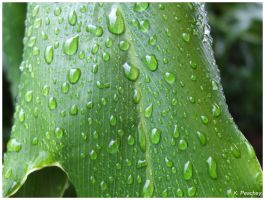 After the Rain 072 by p858snake