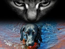 Cats hates dogs by MyWay2Hell