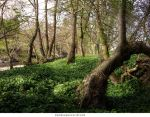 Forest 42 by AnitaJoy-Stock