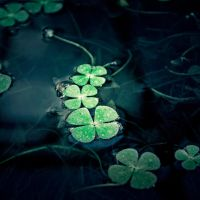 be lucky by Milie-Photography
