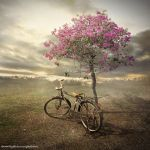 bicycle by evenliu