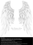 Daydream Wings - White by Thy-Darkest-Hour