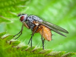 DUNG FLY by iriscup