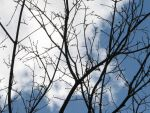 Branches and Sky Stock by thiselectricheart