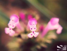 little pinks by HelloKimmy13