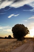 Arbol Grande by SuperStar-Stock