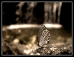 Macro Moth by theluis