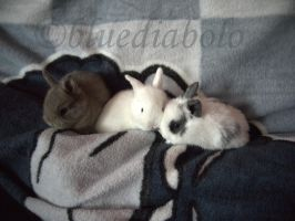 Babybunnys 3weeks old by bluediabolo