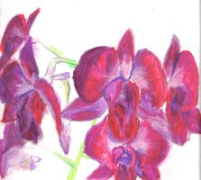 orchids by zenzo1986
