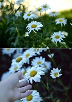 flowers . by justiv