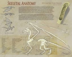 Dragon Anatomy - Skeleton by UberKudzu