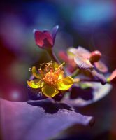 Flowerberry With Flower by Caitiekabob