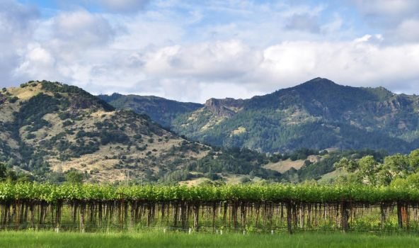 Vineyard and Mountain by stock-pics-textures