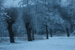 Willow Trees in the Snow by Danimatie
