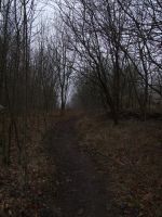 Oechsenberg - forest 3 by sacral-stock