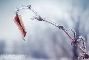 Frozen nature 2 by Dybcio
