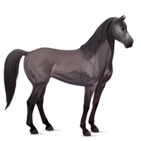 Ten changes into Eleven as horse GIF by ponyhallo1