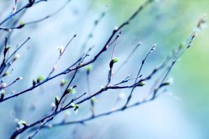 branches of life by miezeTatze