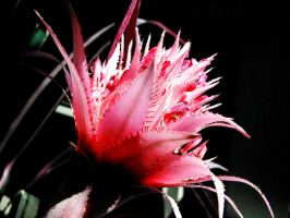 Flower 1 by todds201