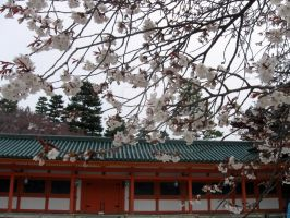 Sakura at Heian Shrine by ChibiKoun