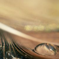 feather by Megson