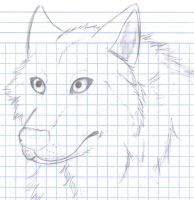 sketch rush_ random wolf by Zire9