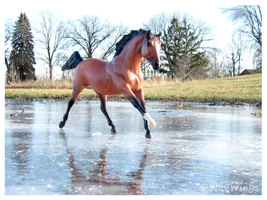 Sliding across frozen Ground by BlueWingsWolf