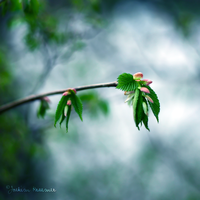 New Life by Healzo
