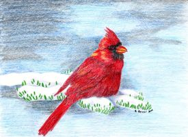 red cardinal on  snowy branch by omagrandmother