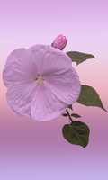Gradient Flower CSS BKG by WDWParksGal-Stock